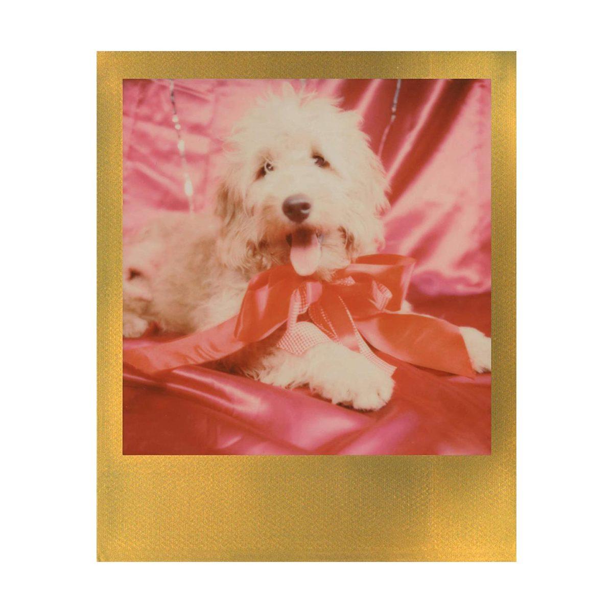 polaroid_600_color_film_gold_frame_03